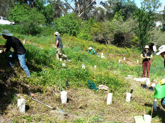 Upper Kedumba Planting Day